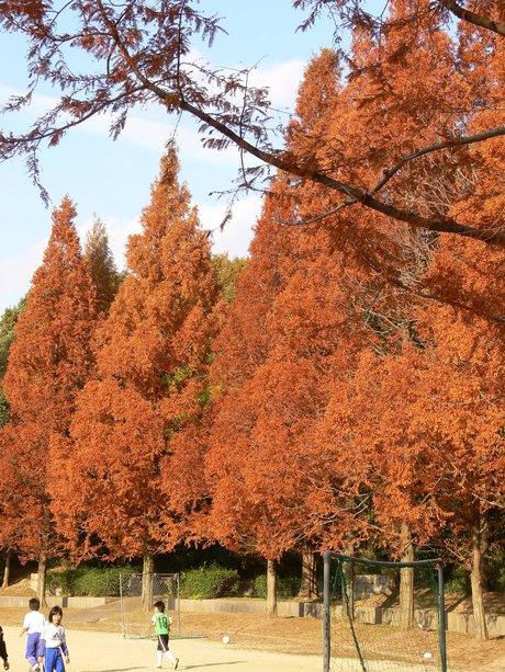 Metasequoia071201_1