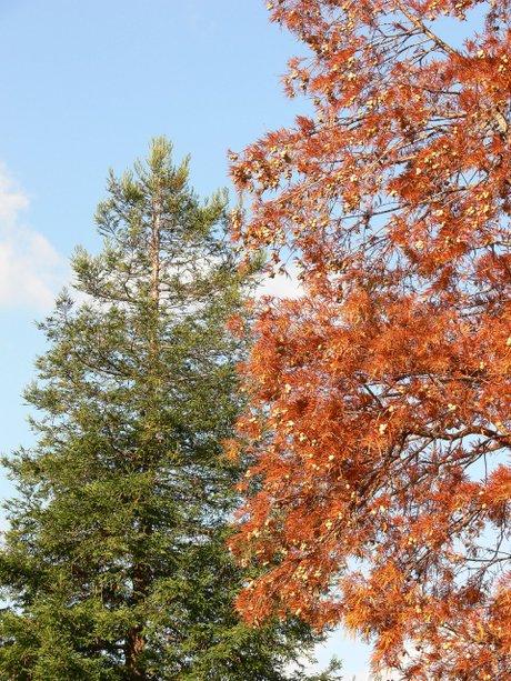 Sequoia071123_1