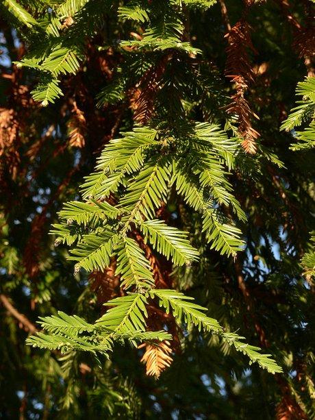 Sequoia071123_2