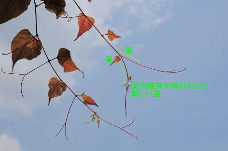 Sankakuzuru080719_2