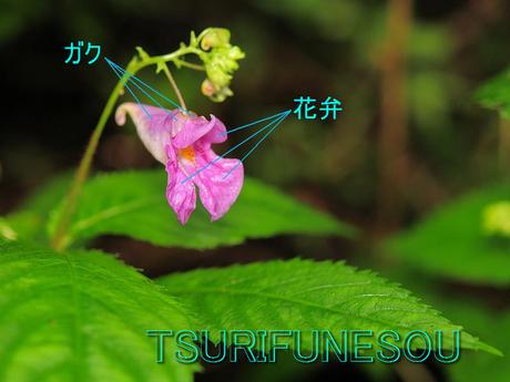 Turifunesou080907_2