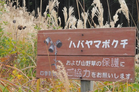 Habayamabokuchi081104_4