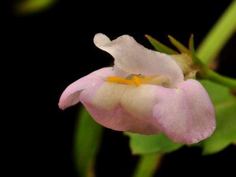 Hirohasuzumenotougarasi091010_2