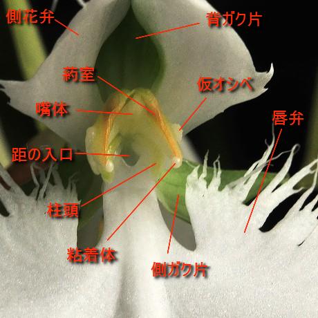 Sagisou090815_3