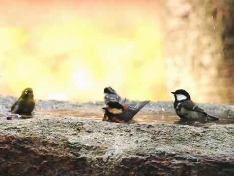 Birdbath121130_1