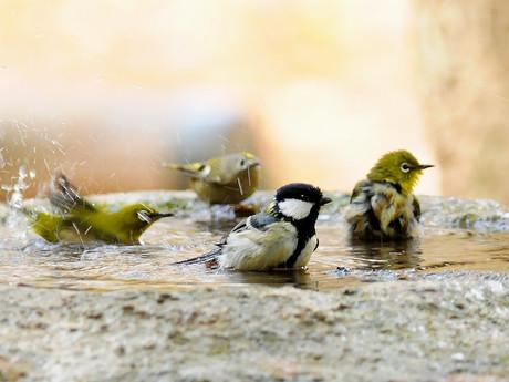 Birdbath121130_2