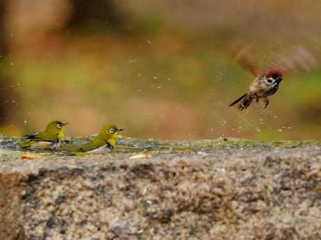 Birdbath121130_3