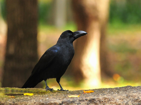 Birdbath121130_4