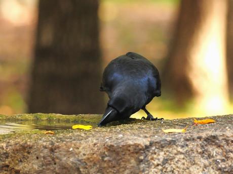 Birdbath121130_5