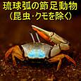 91 琉球弧の節足動物(昆虫・クモを除く)