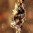 27 ゴミグモ