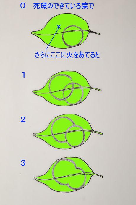 Soyogo111221_a