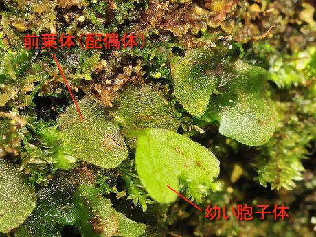 Zenyoutai091115_1