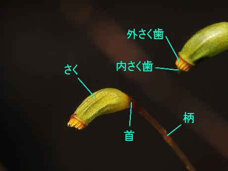 Hinokigoke111221_3