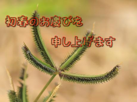 Tatsunotsumegaya081207_02