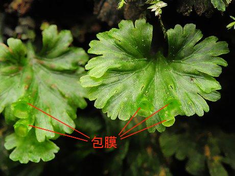 Uchiwagoke120108_2