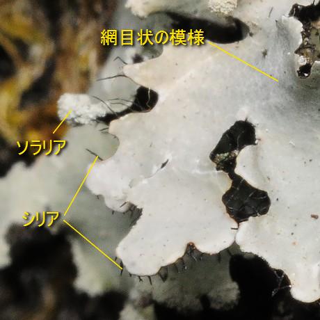 Matsugegoke120115_1