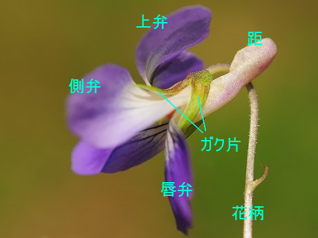 Nioitachitsubo120417_8