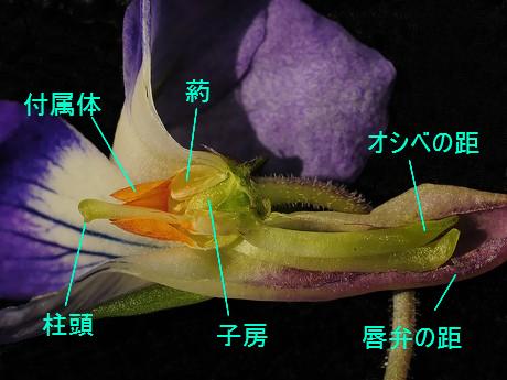Nioitachitsubo120417_6