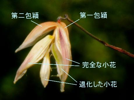 Komegaya080601_1
