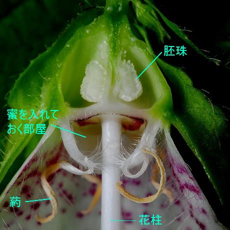 Hotarubukuro120626_7