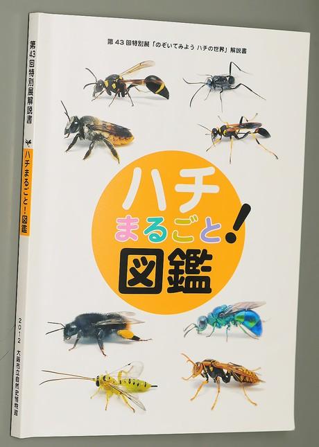 Hachi120731_2
