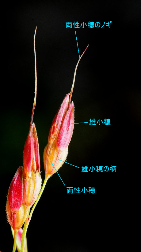 Seibanmorokosi120905_1
